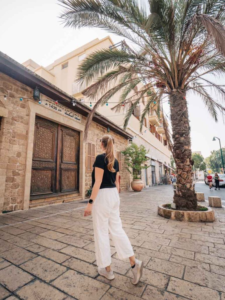 Palm tree in Old Jaffa, Tel Aviv