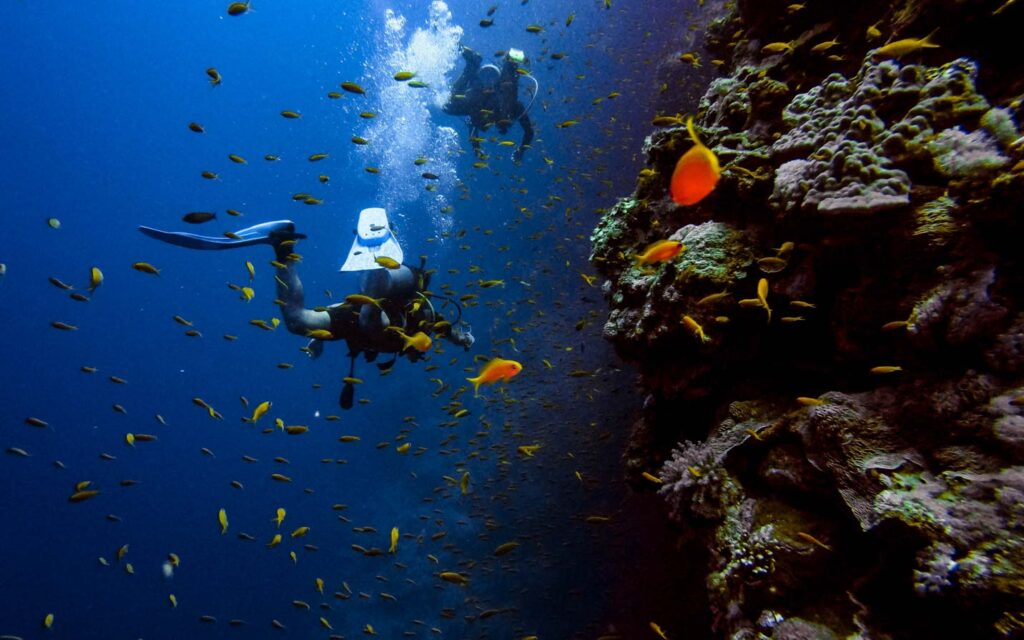 Egypt Red Sea diving